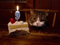 私信 まるです。Happy birthday Maru !