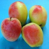 Cea mai simplă și ecologică schemă de tratamente chimice pentru toți pomii din livadă   Paradis Verde Fruit, Tudor, Green, Plant
