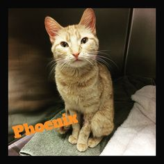 Phoenix was here for her spay. It was great to be a part of her healthcare plan! She's such a cute girl! #catspay #edmontonvet #millwoodseastpets
