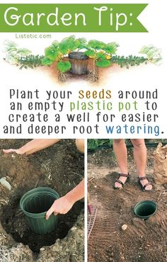 "Create a ""well"" for deep root watering - esp helpful for vining plants like squash that cover most of the soil 