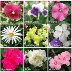 9 Best flower varieties to press.