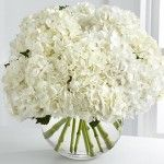 Floral fancy: White and fluffy flowers