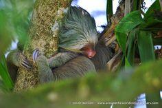 DSC 0220 A Taste of Costa Rican Wildlife from La Selva Biological Station