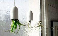 DIY - Hängende Pflanzen (In & Interessant): maxima - Was Frauen wirklich interessiert