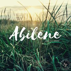 The name Abilene means grass. See more about this name and other botanical baby names at Ava to Zeke! Writing Resources, Writing A Book, Kids Gate, Fantasy Names, Name Inspiration, Drama Funny, Unusual Words, Mean Green, Cute Names