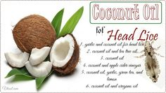 How to use coconut oil for head lice and nits is a new article that shows 7 natural ways using coconut oil to heal head lice.