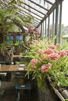 Plants + cafe