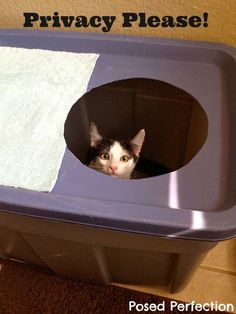 Posed Perfection: Clevercat Litter Box Knock-Off