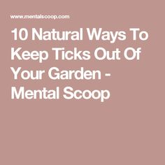 10 Natural Ways To Keep Ticks Out Of Your Garden - Mental Scoop