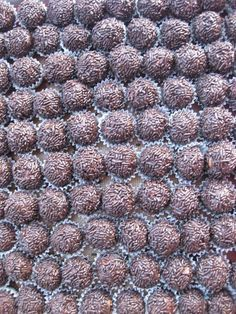 These are the very best rum balls you will ever make, exactly what a Christmas rum ball should be and more, to-die-for delicious with a definite kick. Yeah!