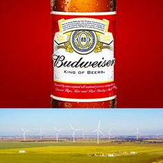 The King of Beers is also now the king of clean energy! @budweiser will soon be brewed with 100% renewable power.  Source: http://ift.tt/2DJZZcg  #RenewUSA #CleanEnergyJobs #Renewables #Solar #WindPower #Jobs #CleanEnergy #renewable #renewablepower #renewableenergy #solarjobs #solarpanels #SolarEnergy #SolarPower #wind #windenergy #WindJobs #USAJobs #RE100 #budweiser #bud #thisbudsforyou