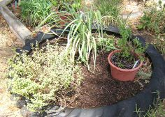 Growing Herbs in Texas: The Importance of Pruning and Mulch