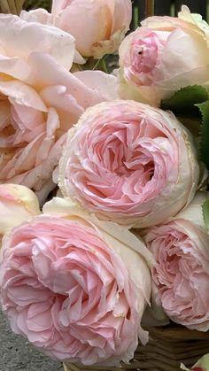 Wholesale Fresh Flowers | Bulk Flowers
