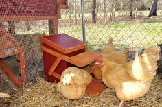 How To Build a Chicken Feeder. Learn to build a chicken feeder and feed your flock without encouraging mold or supporting the local mouse & starling populations. Raising Backyard Chickens, Keeping Chickens, Free Chickens, Keeping Ducks, Backyard Farming, Chicken Feeders, Chicken Coops, Chicken Tractors, Chicken Houses