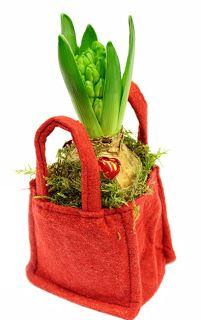 http://holmsundsblommor.blogspot.se/2009/12/vit-hyacint-i-rod-vaska.html Hyacint i röd liten väska