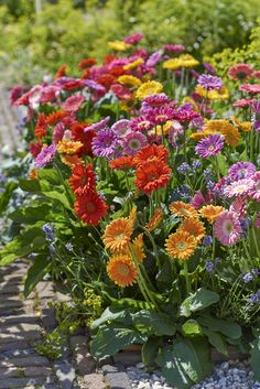 Garvinea® Garden Gerbera mix