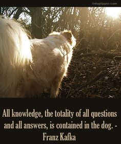 . Animal Quotes, I Love Dogs, Quote Of The Day, Horses, Animals, Animales, Animaux, Animal, Animais