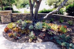Project Gallery - Garden and Landscape photos from homes around San Diego county. Water-wise, native plants, succulents and more.