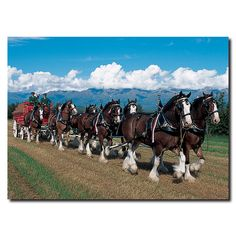 Clydesdales in Blue Sky Mountains Photographic Print on Wrapped Canvas