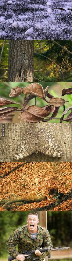 Worlds most invisible camouflages