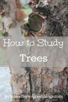 How to Study Trees - tips of how to easy learn to identify trees could be a fun on the side lesson! Outdoor Education, Outdoor Learning, Classical Education, Study Biology, Teaching Biology, Biology Classroom, Nature Activities, Stem Activities, Learning Activities