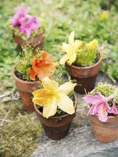Azalea Thejoyofplants.co.uk