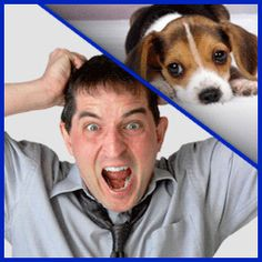 Doggy Dan's Perfect Puppy Program will help you solve every puppy behavior issue with step-by-step video training. It's the best puppy training available online. Puppy Training