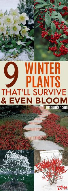 These 9 Blooming Winter Plants Are BREATH TAKING! I can't believe you can have flowers this beautiful during the cold months!