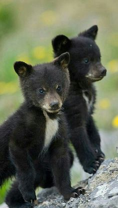 Two Little Cubs!