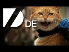 Die Straßenmusiker-Katze