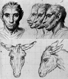 by Charles LeBrun to the Academy about the correlation between the human face and that of the animal.