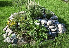 Tee yrteille suotuisa kasvupaikka kivistä | Meillä kotona