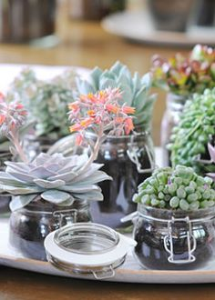 Cute idea - plants in glass pots