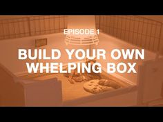 Video: Build Your Own Dog Whelping Box - Breeding Business