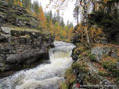 Lapland of Finland, Äkäslompolo -KUERLINKKA- Kuohuva koski, alempi Kuerlinkka. Kuerlinkkoja on Kuerjoessa kaksi,ylempi ja alempi.Kuerlinkka-nimi on saamelaisperäinen (Kouderlinkka) ja tarkoittaa taimenputousta.Alemman linkan kohdalla oli aikoinaan kalakoreja,joihin yläjuoksulle kutemaan pyrkineet kalat joskus erehtyivät hyppäämään. By Jukka Parkkinen ja Tuija Wetterstrand