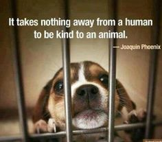 It takes nothing away from a human to be kind to an animal.