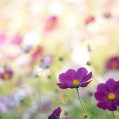 Over Free Flower wallpaper - Spring Wildflowers - - 7 wallpaper in Dream Wallpaper. Spring Wildflowers, Spring Flowers, Wild Flowers, Purple Flowers, Prado, Meadow Garden, Blog Pictures, Wildflower Seeds, Garden Borders