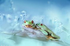 Magical World of Frogs
