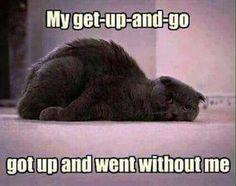 Get Up Got Up Went