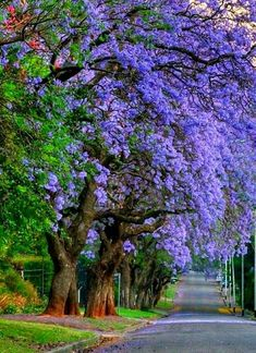 Beautiful Roads, Beautiful Images, Beautiful Gardens, Beautiful Flowers, Unique Trees, Colorful Trees, Pretty Landscapes, Autumn Scenery, Garden Trees