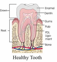 I had to go to an endodontic to get my tooth looked at. Looks like I have a root canal. I'm glad we caught it as early as we did so that we can get it taken care of!