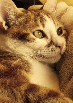 My kitten Daisy