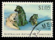 LastHuskies #Dog #Australia #PassionGiftStampArt #Art