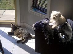 Lacey and Ramin relaxing in the sunshine :)