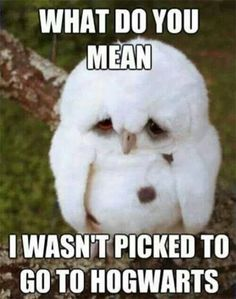 Funny pictures about Sad Baby Owl. Oh, and cool pics about Sad Baby Owl. Also, Sad Baby Owl. Funny Animal Quotes, Funny Animal Pictures, Baby Pictures, Animal Humor, Funny Photos, Meme Pics, Funny Cute, The Funny, Super Funny