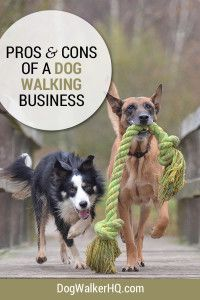 Starting dog walking services is like any other business; you need to consider the pros and cons.