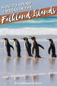Two Weeks in the Falkland Islands Itinerary and Travel Guide | The Falkland Islands are one of those rare places left where you can escape the modern world, located 300 miles to the east of the bottom tip of South America. Their remote location has left the Falklands a place for one of a kind wildlife encounters. | Getting Stamped - Couple #Travel & #Photography #Blog | #FalklandIslands #SouthAmerica  | south america travel Top All Inclusive Resorts, Travel Guides, Travel Tips, South America Travel, White Sand Beach, Adventure Awaits, Luxury Travel, Dream Vacations, Travel Photos