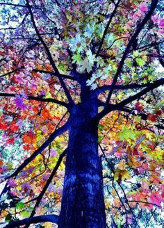 Looking up at a tree with colorful leaves. #coloreveryday
