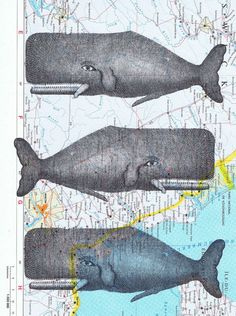 Whales.Collage.Map by studioflowerpower on Etsy, $8.50