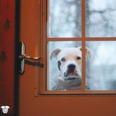 I'm done being stubborn & I'm ready to come in now!   Stache didn't want to come in from the snow with me and Beebs, He's sooo stubborn. I can call for him and he'll just stand there looking at me. As soon as that door closes, here he comes!